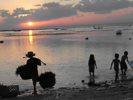 seaweed farming on Jungutbatu beach