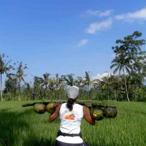 the local method of carrying coconuts turns into weight training for Jo