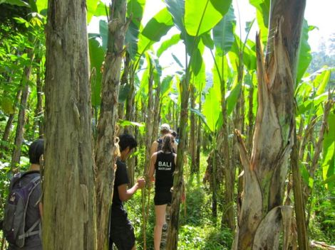 trekking through banana trees… mud underfoot